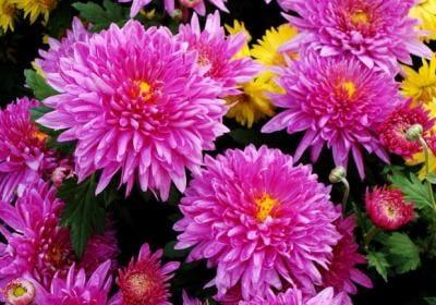 Растения для клумбы: цветы с 9
